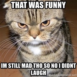 angry cat 2 - That was funny Im still mad tho so no i didnt laugh