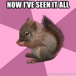 Shipper Squirrel - now i've seen it all