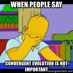 Homer Facepalm - When people say Convergent Evolution is not important