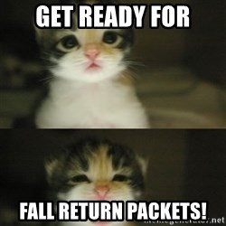 Adorable Kitten - Get ready for Fall return packets!