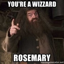 Hagrid - You're a wizzard  RosemarY