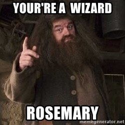 Hagrid - Your're a  wizard  Rosemary