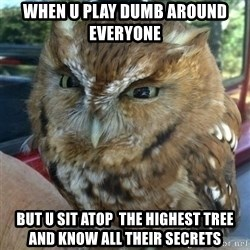 Overly Angry Owl - When u play dumb around everyone But u sit ATOP  the highest tree and know all their secrets