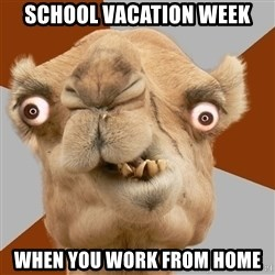 Crazy Camel lol - School Vacation week when you work from home