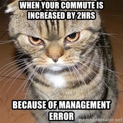 angry cat 2 - When your commute is increased by 2hrs because of management error