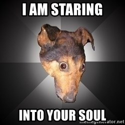 Depression Dog - i am staring into your soul