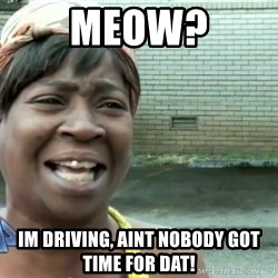 sweet brown ios - Meow? Im driving, aint nobody got time for dat!