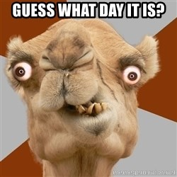 Crazy Camel lol - GUESS WHAT DAY IT IS?