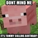 Minecraft PIG - dont mind me it's tommy collins birthday!