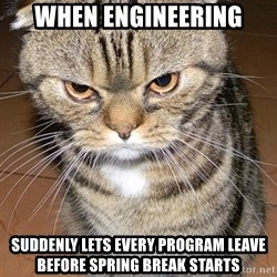 angry cat 2 - When Engineering suddenly lets every program leave before spring break starts