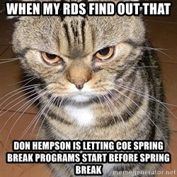 angry cat 2 - when my RDs find out that Don Hempson is letting COE spring break programs start before spring break