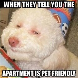 Troll dog - When They tell you the  apartment is pet friendly