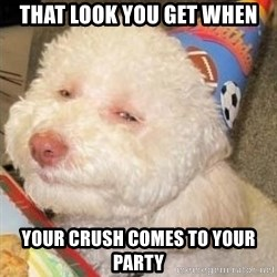 Troll dog - that look you get when your crush comes to your party