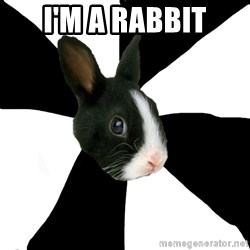 Roleplaying Rabbit - I'm a rabbit