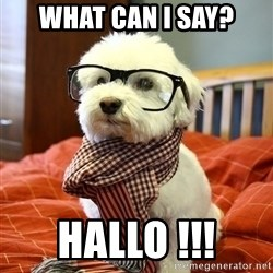 hipster dog - what can i say? hallo !!!