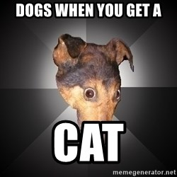 Depression Dog - dogs when you get a cat