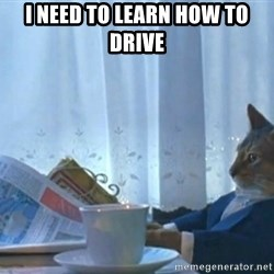 Sophisticated Cat - I need to learn how to drive