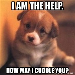 cute puppy - I am the help. How may i cuddle you?