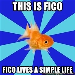 Absentminded Goldfish - this is fico  fico lives a simple life