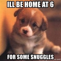 cute puppy - Ill be home at 6  For some snuggles