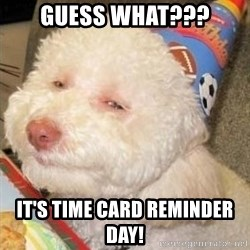 Troll dog - guess what??? it's time card reminder day!