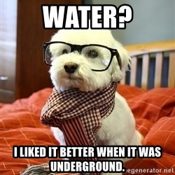 hipster dog - Water? I liked it better when it was underground.