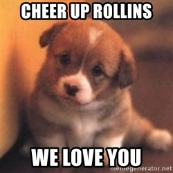 cute puppy - Cheer up Rollins We love you