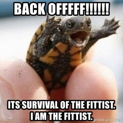 angry turtle - back offfff!!!!!! its survival of the fittist.        i am the fittist.