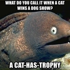 Bad Joke Eel v2.0 - What do you call it when a cat wins a dog show? A Cat-has-trophy