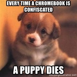 cute puppy - Every time a chromebook is confiscated a puppy dies