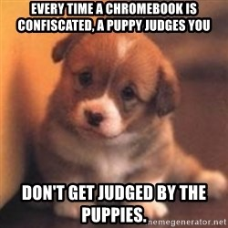cute puppy - every time a chromebook is confiscated, a puppy judges you Don't get judged by the puppies.