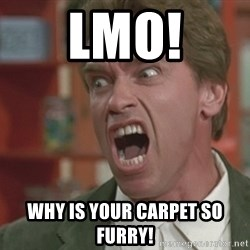Arnold - lmo! whY IS YOUR CARPET SO FURRY!