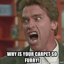 Arnold -  WHY IS YOUR CARPET SO FURRY!