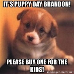 cute puppy - It's Puppy Day Brandon! Please buy One for the kids!