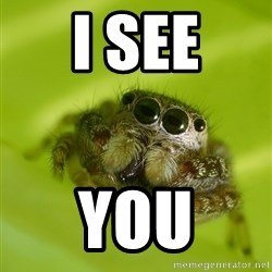 The Spider Bro - I see You