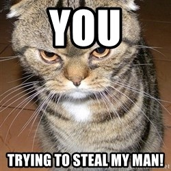 angry cat 2 - You Trying to steal my man!