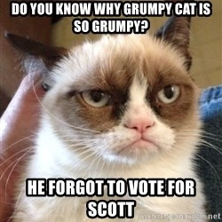 Grumpy Cat 2 - Do you know why grumpy cat is so grumpy? he forgot to vote for scott