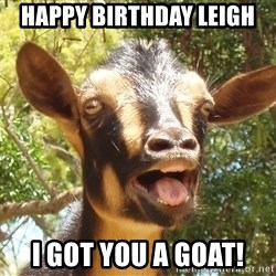 Illogical Goat - Happy Birthday Leigh I Got you a goat!
