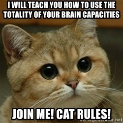 Do you think this is a motherfucking game? - I will teach you HOW to use the totality of your brain capacities join me! cat rules!