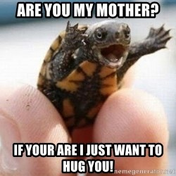 angry turtle - Are you my mother? If your are I just want to hug you!