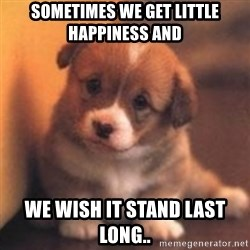 cute puppy - Sometimes we get little happiness and we wish it stand last long..