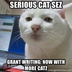 Serious Cat - SErious Cat sez Grant writing: Now with more catz