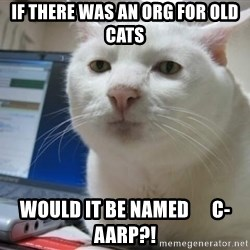 Serious Cat - If there was an org for old cats would it be named      C-AARP?!