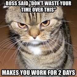 """angry cat 2 - Boss said """"don't waste your time over this"""" Makes you work for 2 days"""