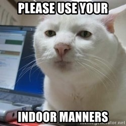 Serious Cat - please use your indoor manners