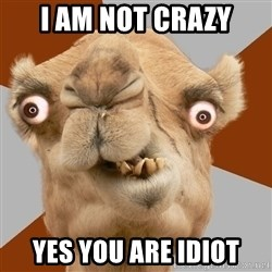 Crazy Camel lol - i am not crazy yes you are idiot