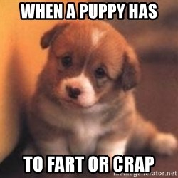 cute puppy - when a puppy has  to fart or crap