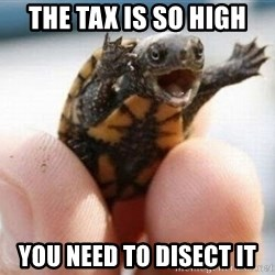 angry turtle - The tax is so high you need to disect it