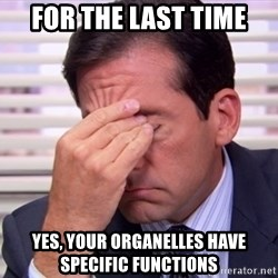 10564 - for the last time yes, your organelles have specific functions