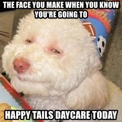 Troll dog - The face you make when you know you're going to happy tails daycare today